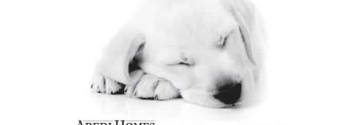 Aredi_puppyad_700